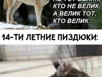 мемы с волками