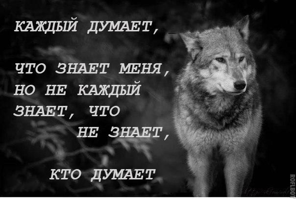 Волки с цитатами мем