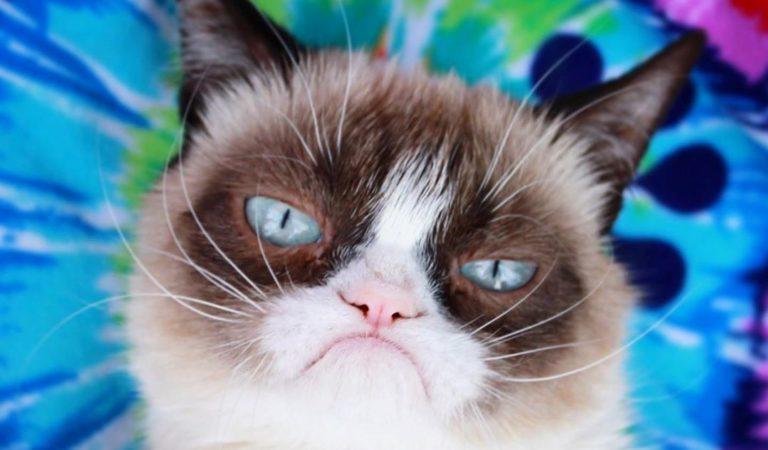 Умерла Grumpy Cat, самая грустная кошка в мире
