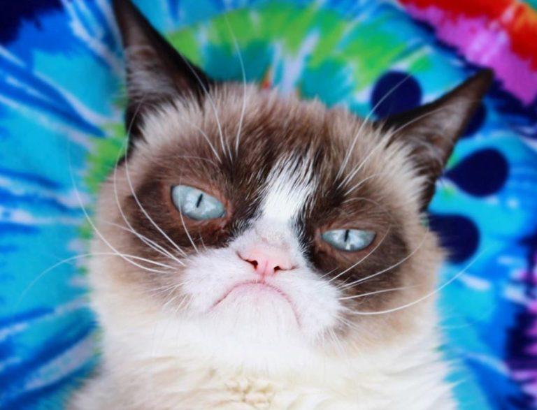 Умерла Grumpy Cat