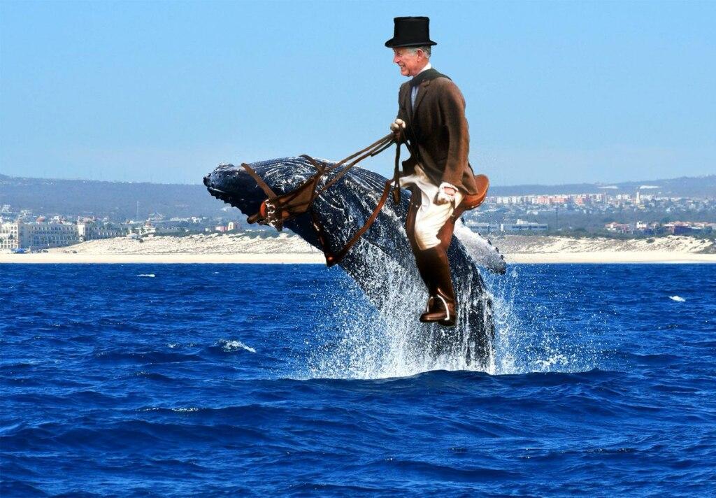Трамп с принцем китов
