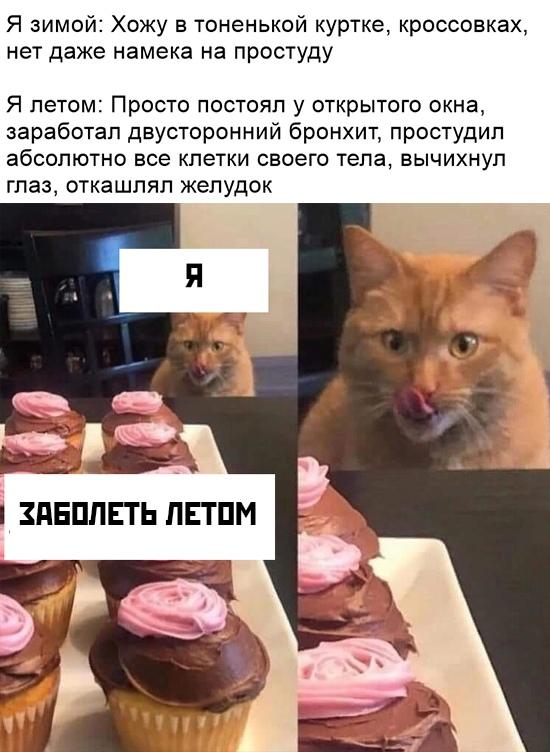 Кот сладкоежка