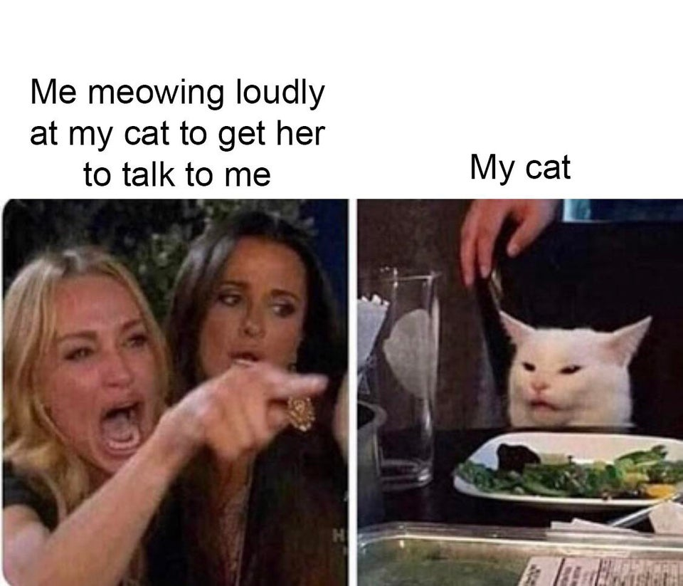 Озадаченный кот сидит за столом