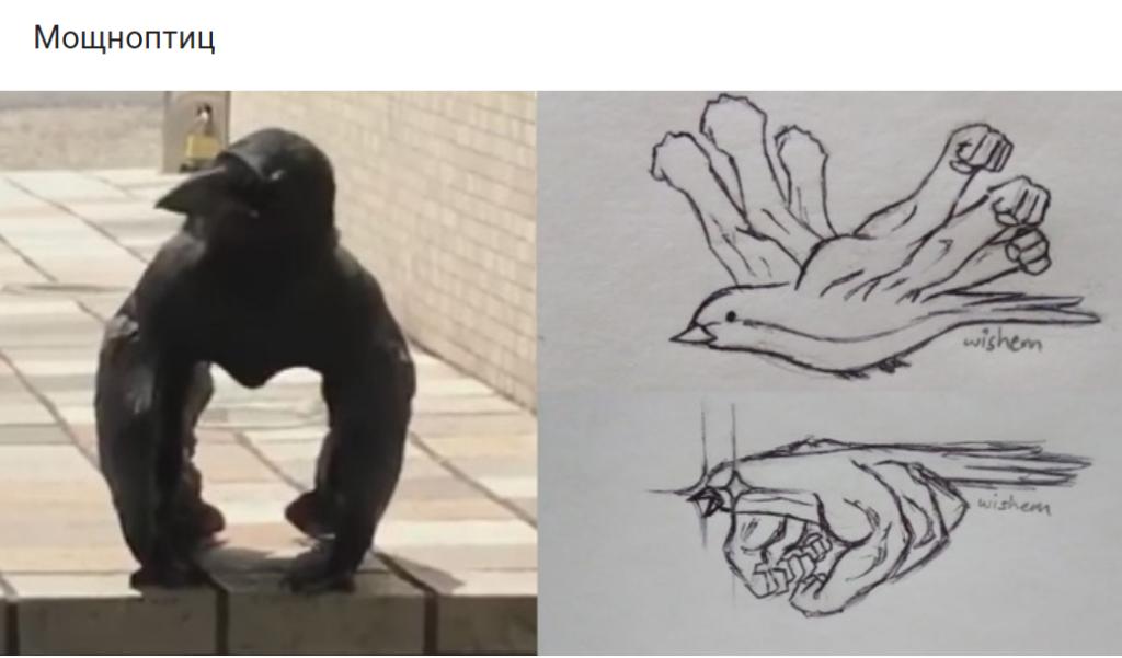Мощноптиц обыкновенный. Видео с вороной-гориллой стало вирусным в интернете