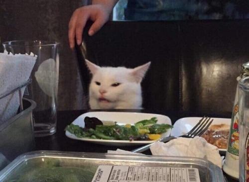 Белый кот сидит за столом перед ним тарелка