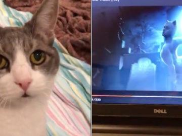 Настоящие кошки смотрят трейлер мюзикла Сats