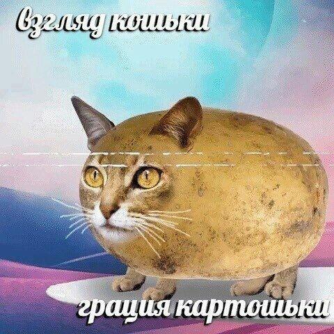 Взгляд кошки грацию картошки