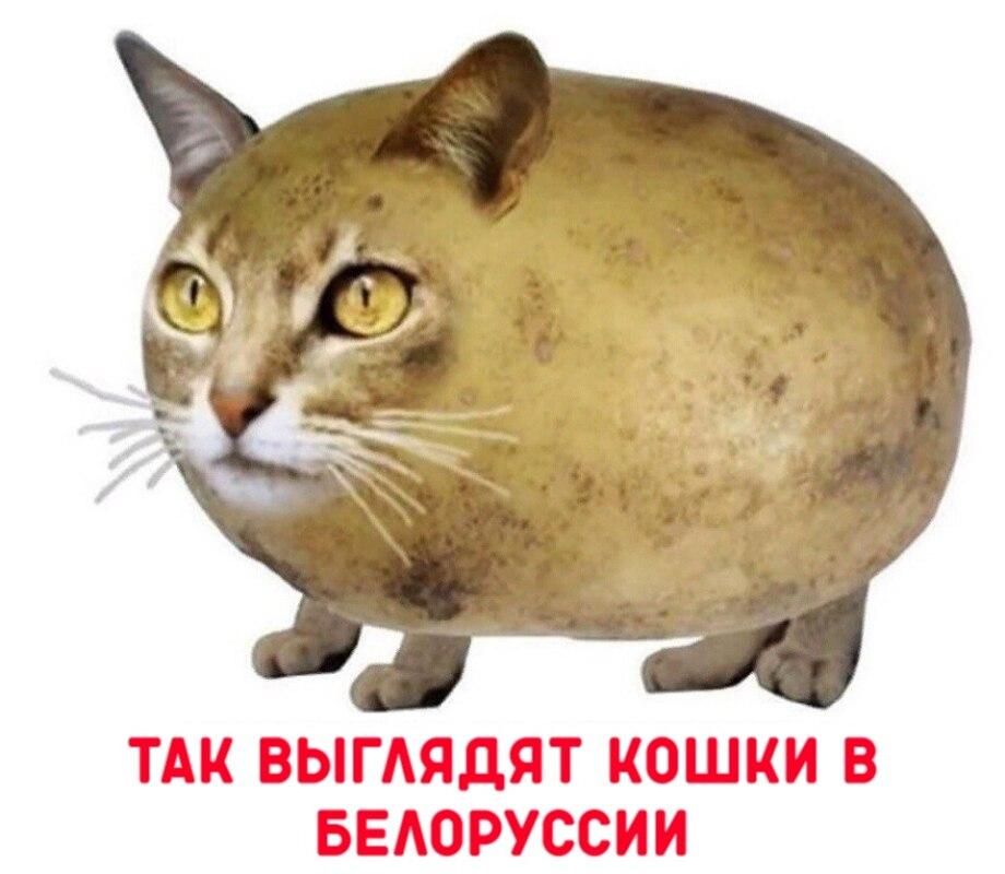 Кошка картошка