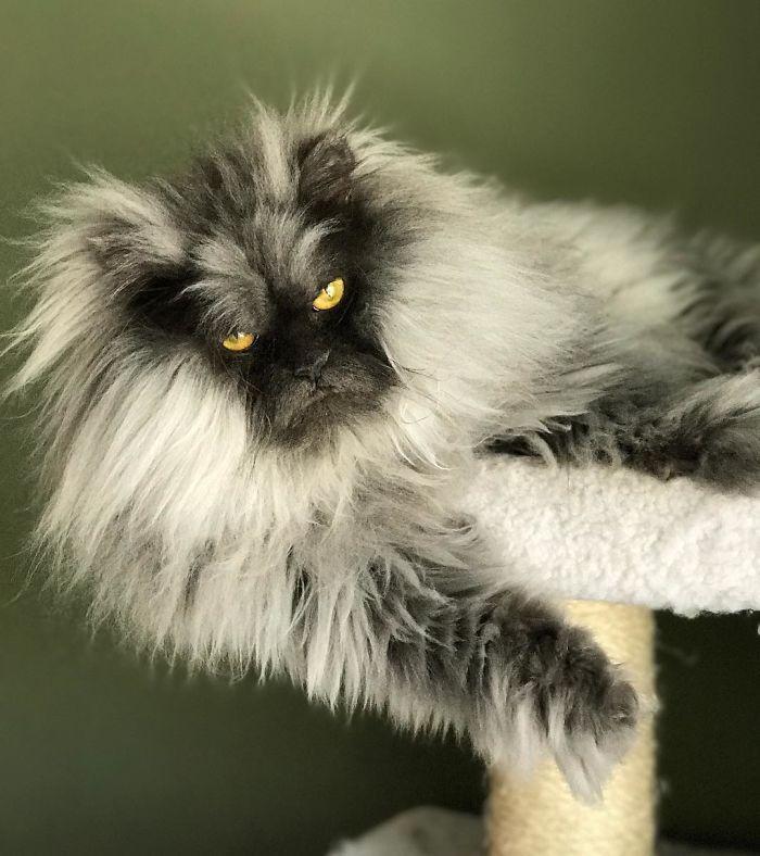 злой кот Джуно