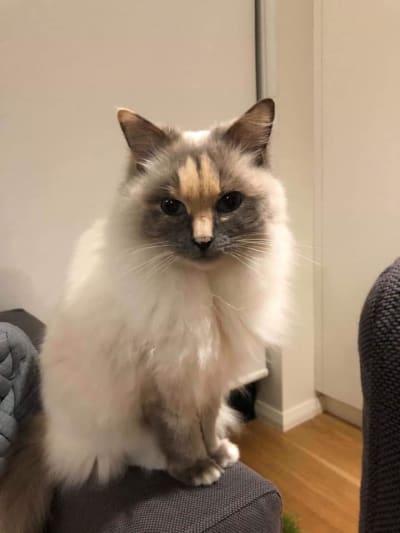 Кошка с членом на морде