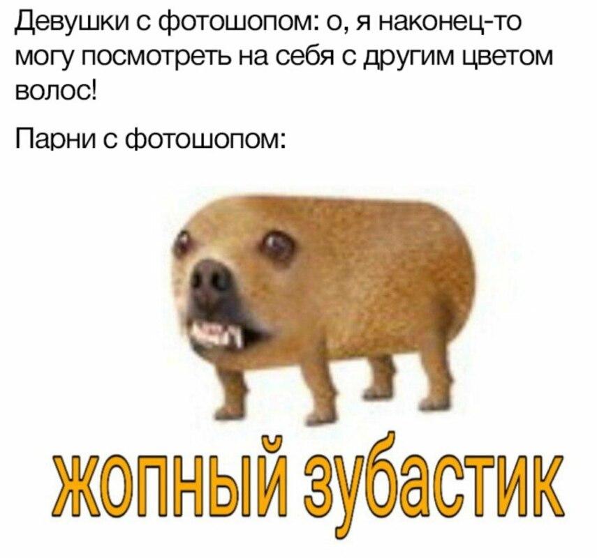 Гавкошмыг