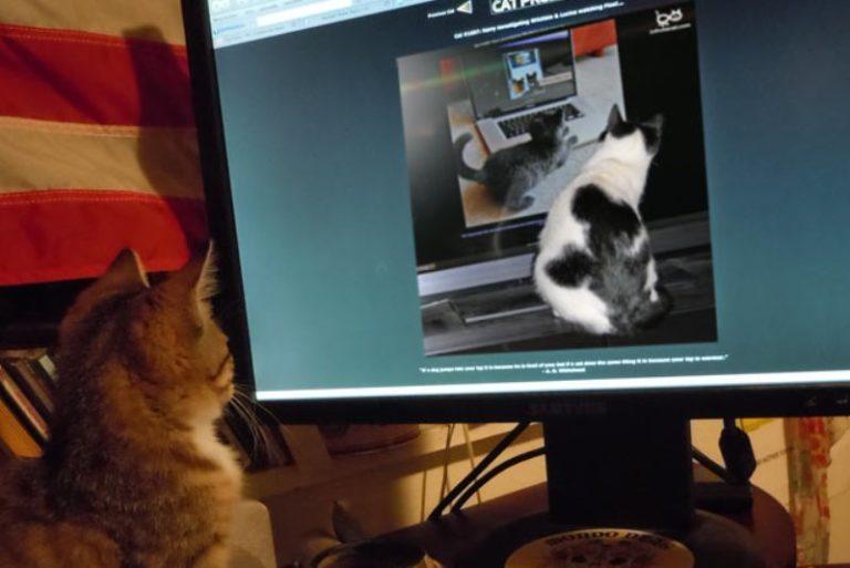 Коты смотрят на других котов
