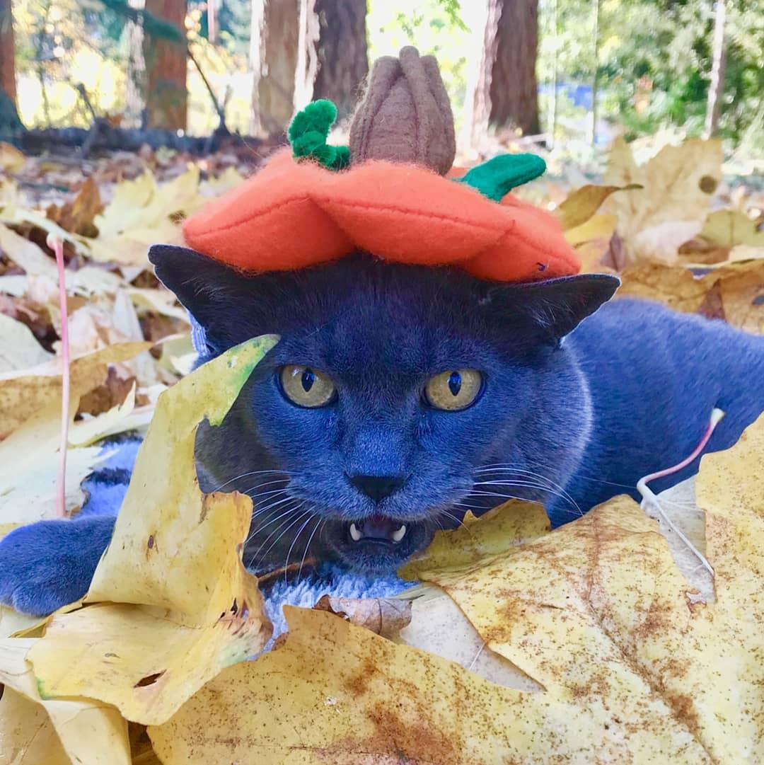 Толстая кошка Шлакоблок