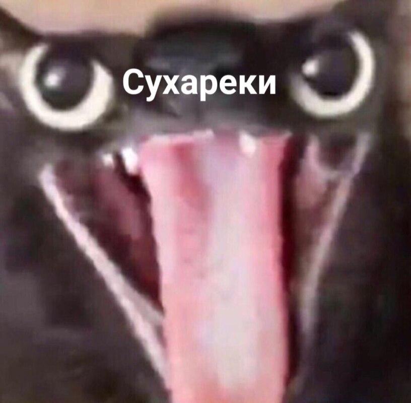 сухареки мем с котом