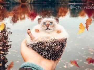 животные с кошачьими мордами