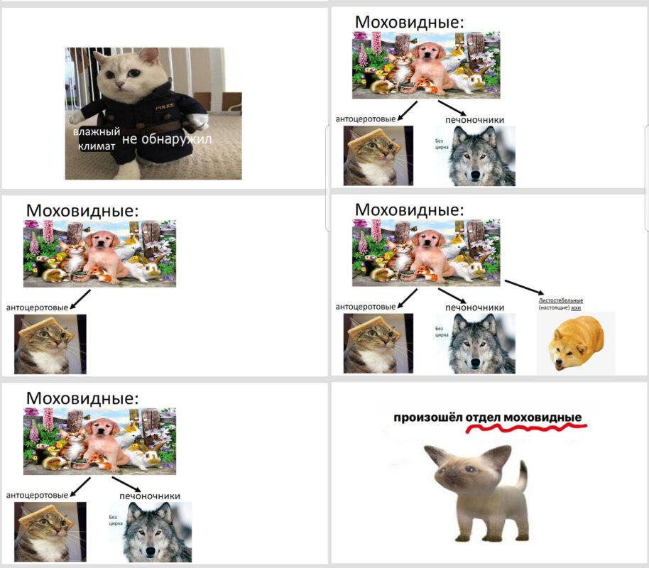 мемы в презентации