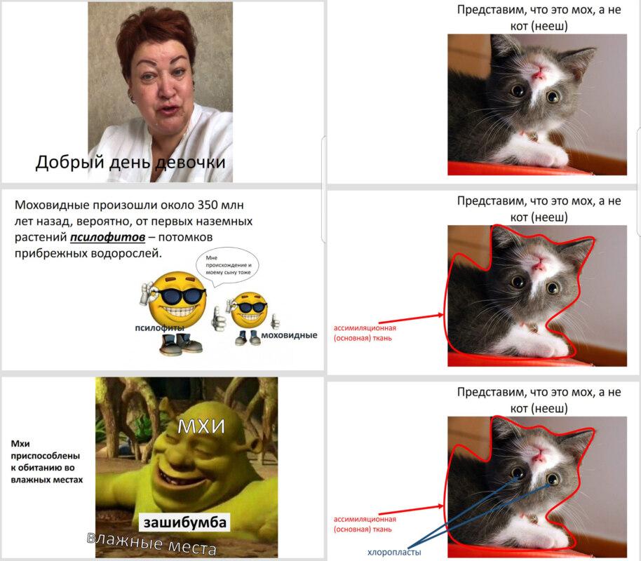 школьница сделала презентацию по биологии с помощью мемов