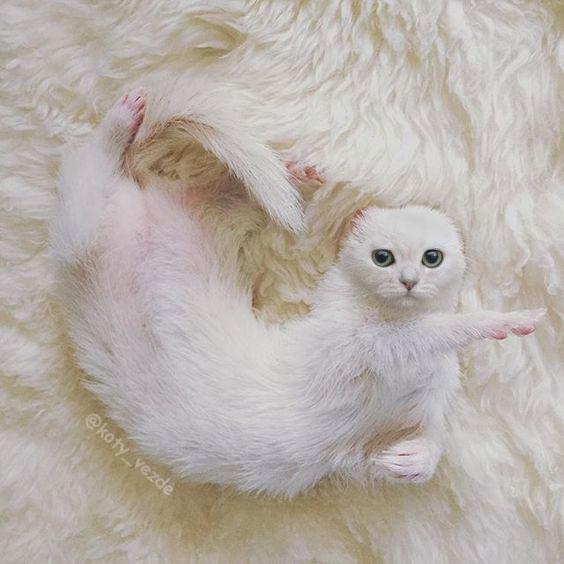 коты везде инстаграм