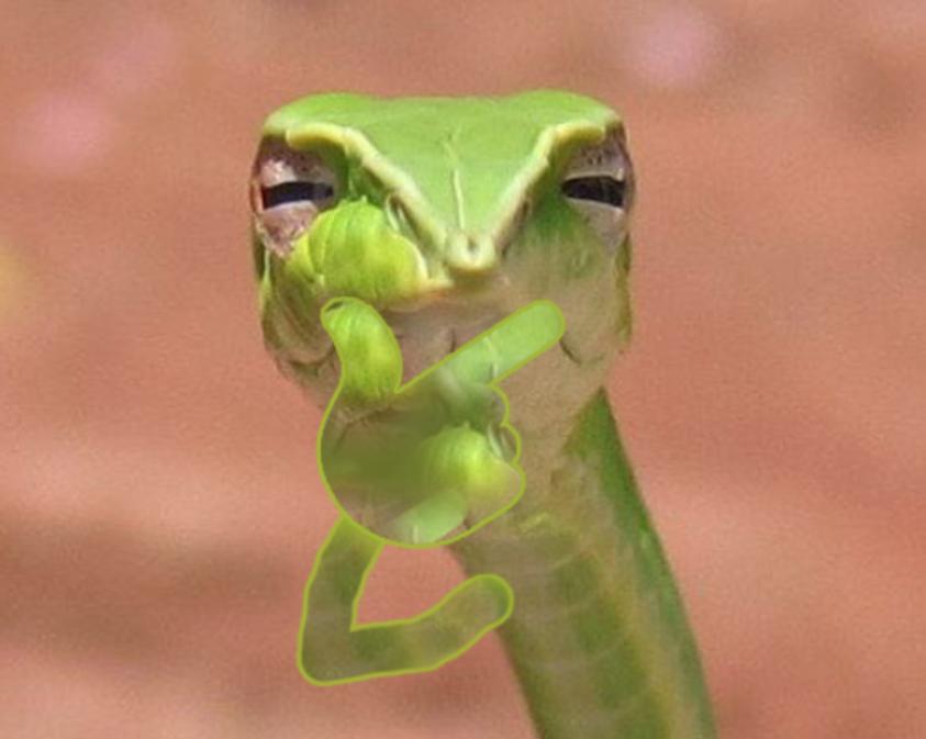 Скептическая змея