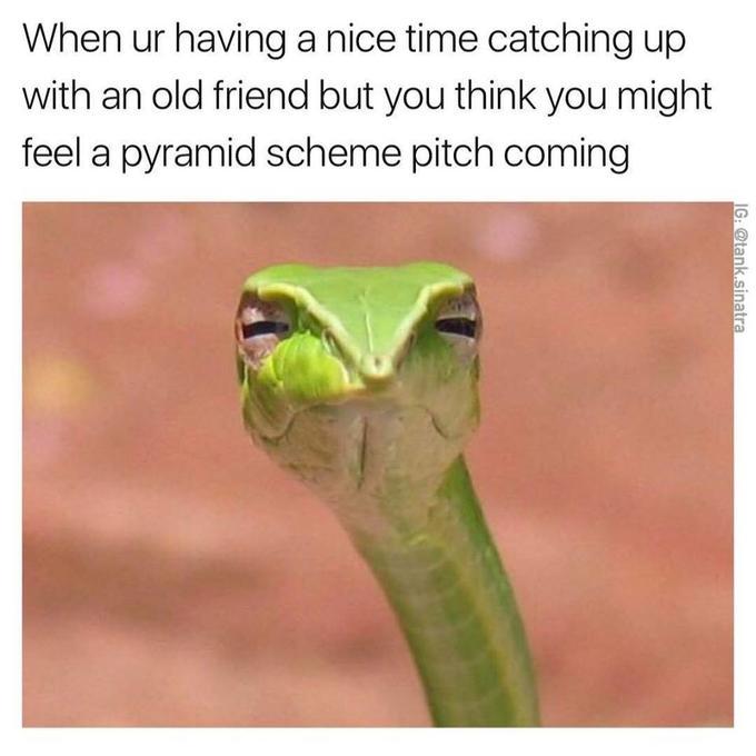змея плетевидка мем