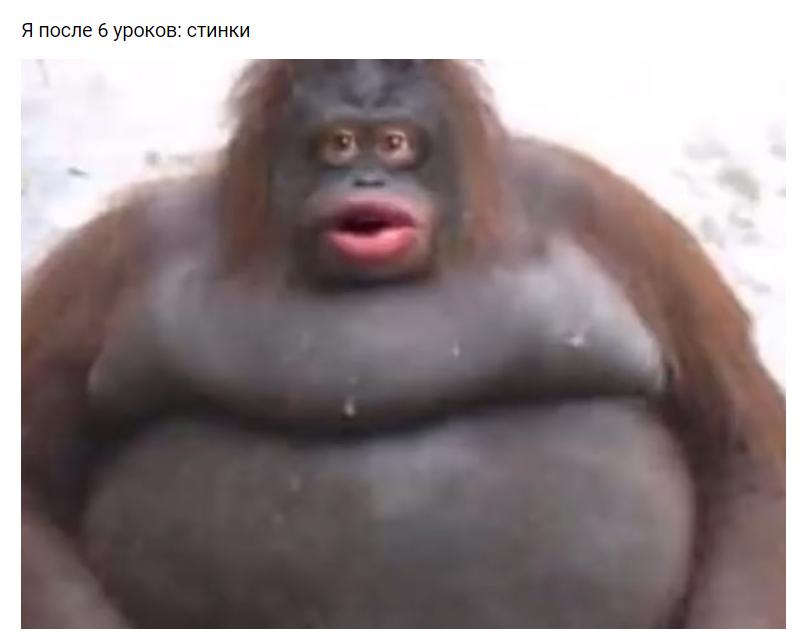оо стинки мем