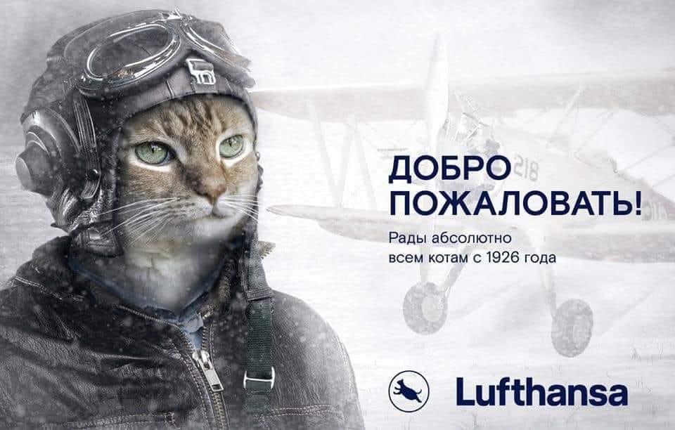 """Толстый кот Виктор против """"Аэрофлота"""""""
