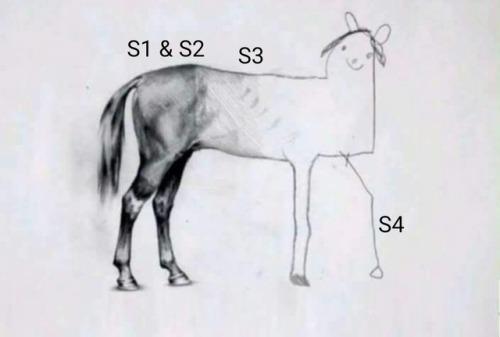 Незаконченный рисунок лошади