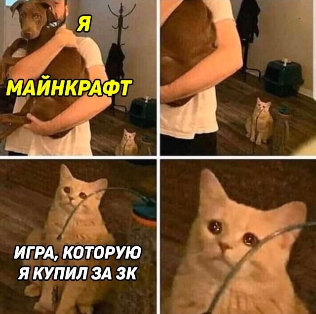 Кот смотрит на хозяина с собакой
