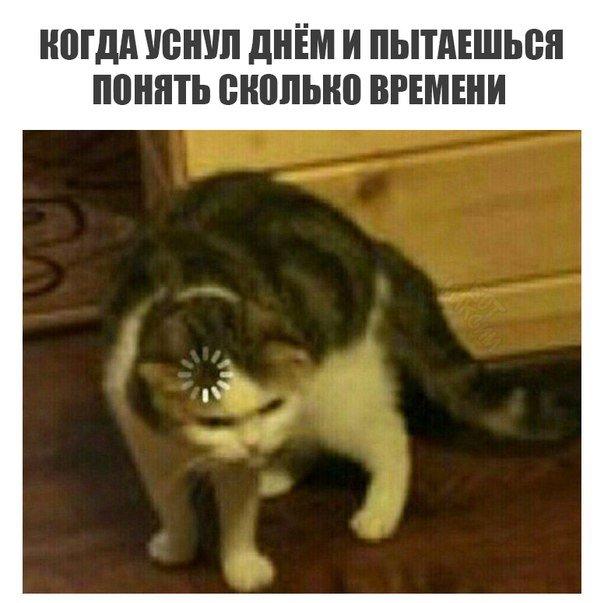 Кот грузится мем