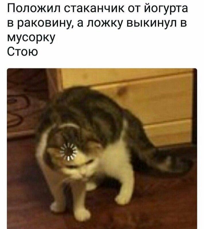 Кот грузится
