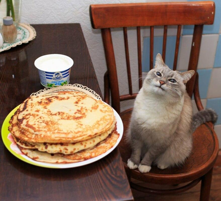 Мем кот с блинами