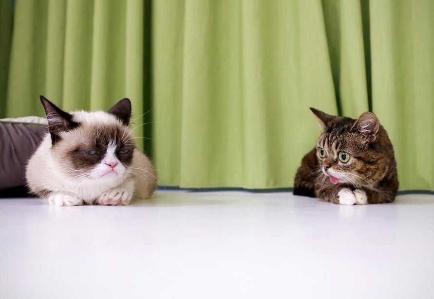 lil bub and grumpy cat