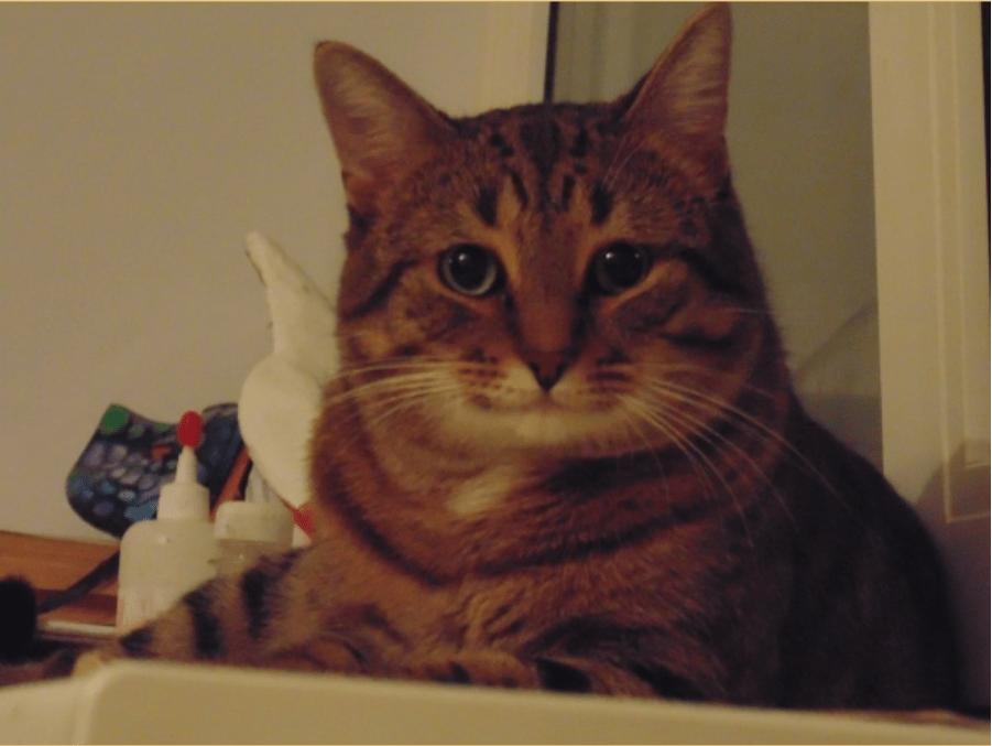 Полосатый кот улыбается