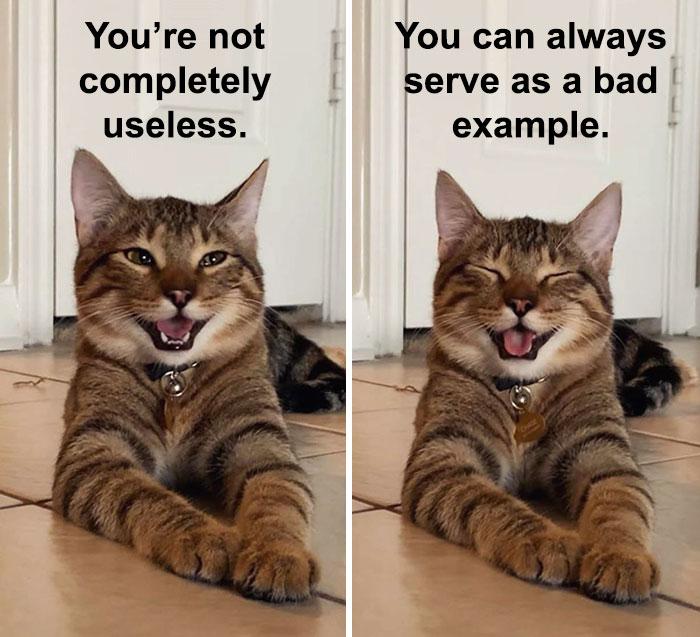 Котик смеется как твой батя