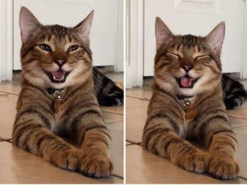 котик смеется