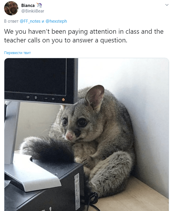 мемы про поссумов