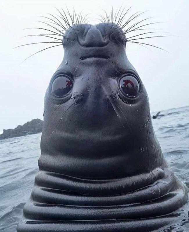 Тюлень задрал голову мем