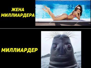 Голова тюленя