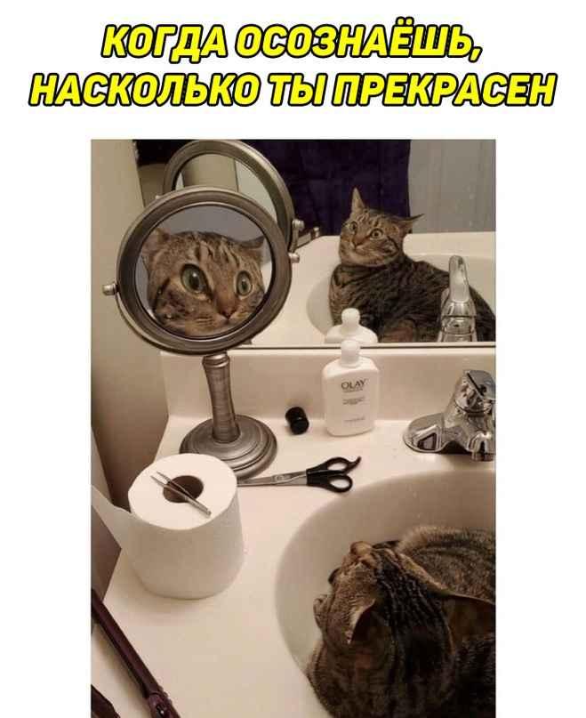 кот в двух зеркалах