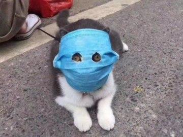 Кот в медицинской маске