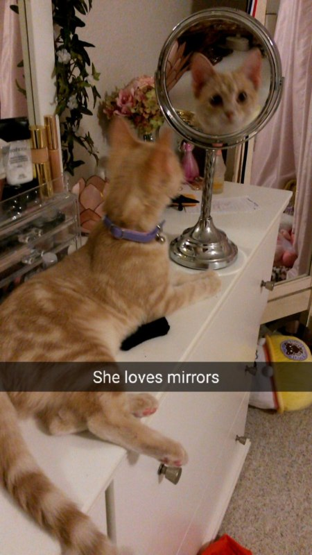 кошка в зеркале