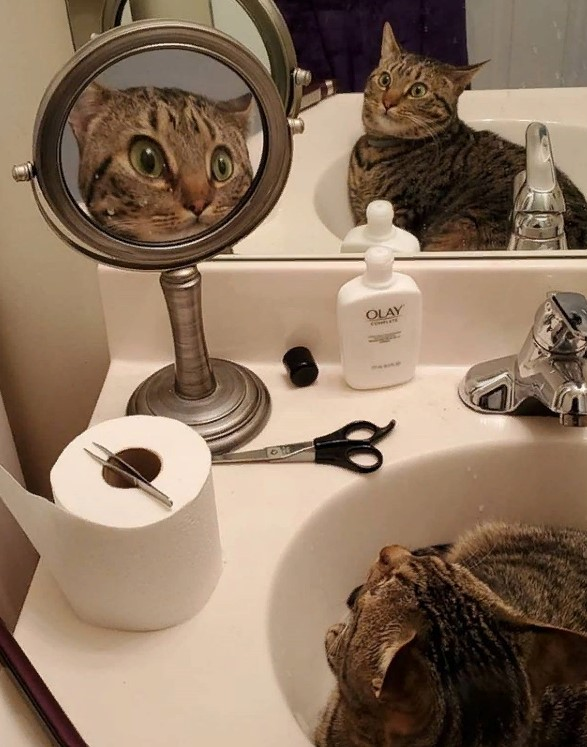 Кот увидел себя в двух зеркалах