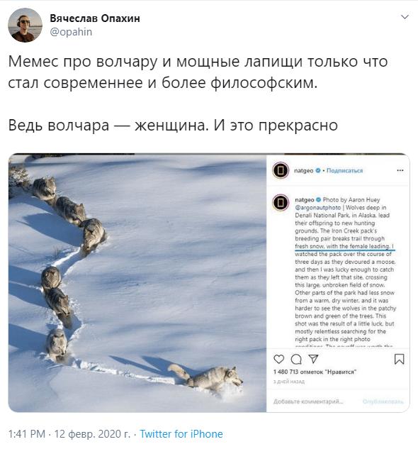 шерстяной волчара новости