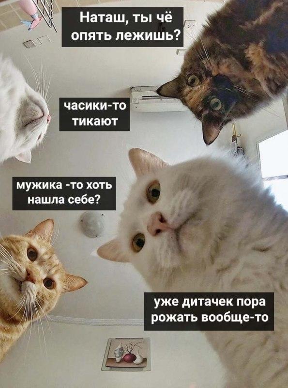 Наташ, ты спишь? Мы там все уронили