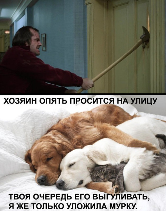 животные устали