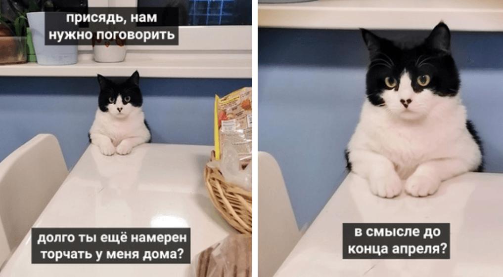 коты против карантина