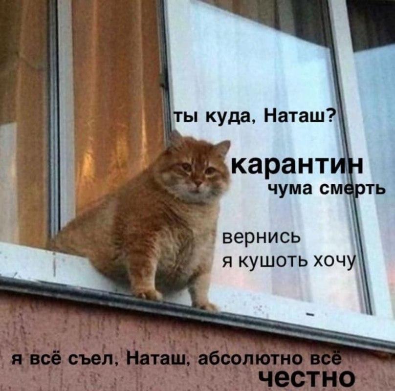 Наташа мемы