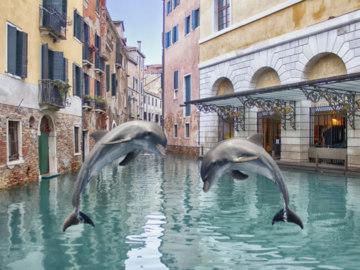 Дельфины вернулись в Венецию