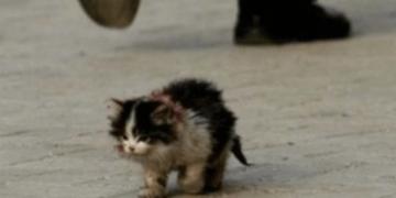 Я обязательно выживу - мем, пародирующий картинку с маленьким котенком на дороге.