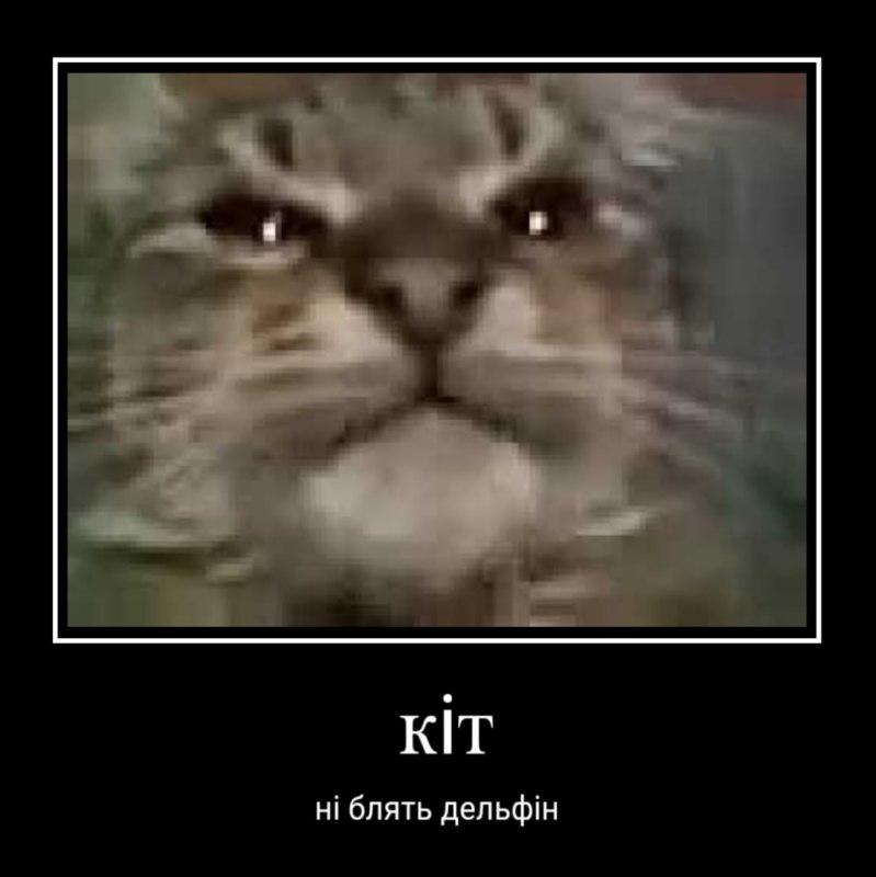 Кіт ти маму мав